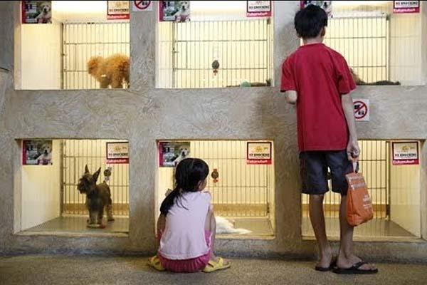 cara memulai bisnis pet shop