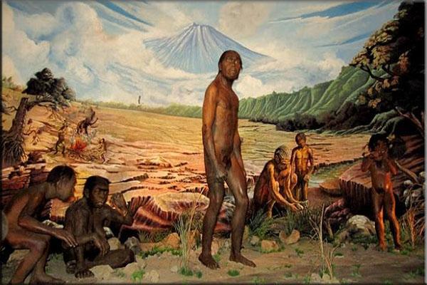 Pengertian Manusia Homo Soloensis