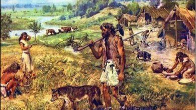 Photo of Sejarah Manusia Homo Wajakensis : Ciri-Ciri