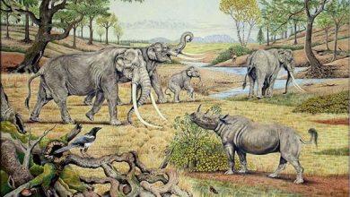 Photo of Mengenal Masa Peninggalan Zaman Mesozoikum