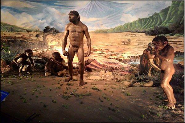 Ciri - ciri Manusia Homo Soloensis
