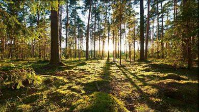 Photo of Pengertian Lingkungan : Jenis, Konsep Dan Penyebab Kerusakan