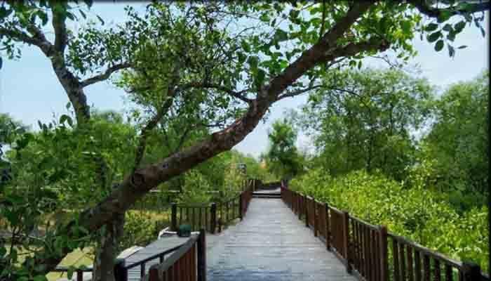 Wisata Hutan Mangroove Wonorejo