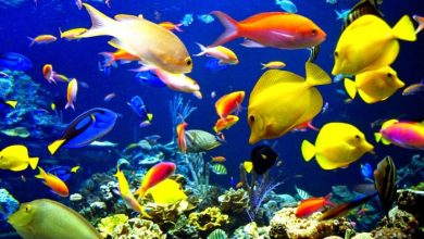 Photo of 6 Tren Ikan Hias Tercantik Dan Bernilai Ekonomi