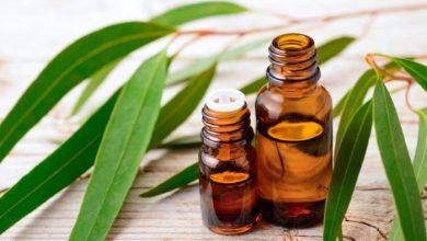 Photo of 5 Manfaat Minyak Eucalyptus Yang Patut Diketahui, Anti Virus!